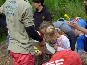 Exploring our pond dipping findings