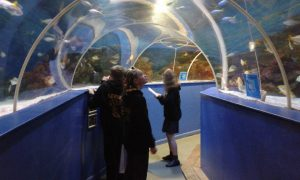 Watching sharks and rays (which are a type of shark) in the tunnel.